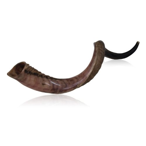 Half Polished Half Natural Kudu Horn Shofar