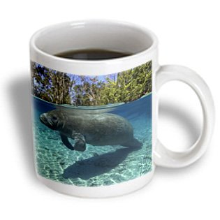 3Drose Mug_46008_1 Florida Manatee, Trichechus Manatus Latirostris, Crystal River, Florida, Usa Ceramic Mug, 11-Ounce