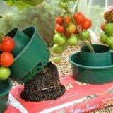 Garden Growpot
