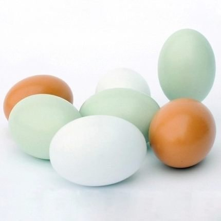 Wooden Fake Eggs 7 pieces 3color (Wood Chicken Eggs compare prices)