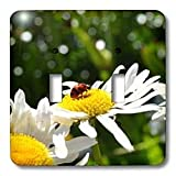 Patricia Sanders Flowers - ladybug and daisy - Light Switch Covers - double toggle switch ~ Patricia Sanders