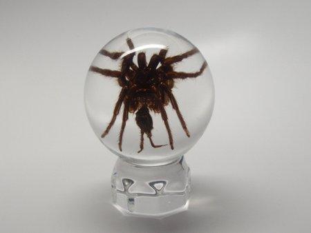 Lucite Treasures Tarantula Spider Sphere