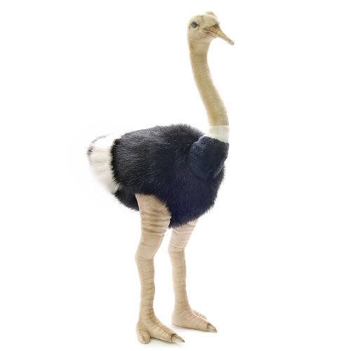 Male Ostrich Stuffed Animal<br>Hansa