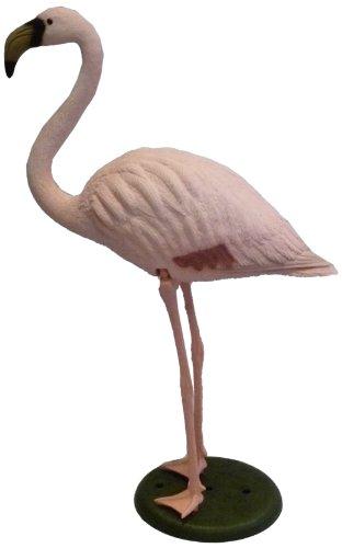 Apollo-Flamingo