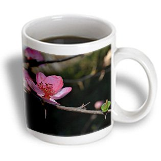 Whiteoak Photography Floral Prints - Single Pink Bloom On Tree Branch - 15Oz Mug (Mug_110146_2)