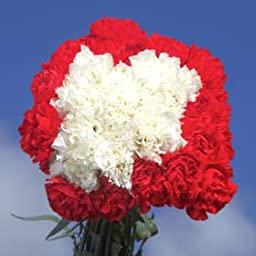 Long Stem Christmas Color Carnations | 300 Christmas Color Carnations Long
