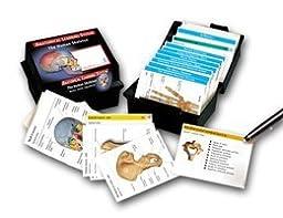Skeletal System: Bones, Joints and Ligaments Flash Cards
