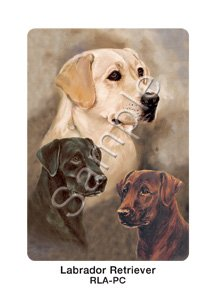 Best Friends Playing Cards, by Ruth Maystead - Labrador Retrievers