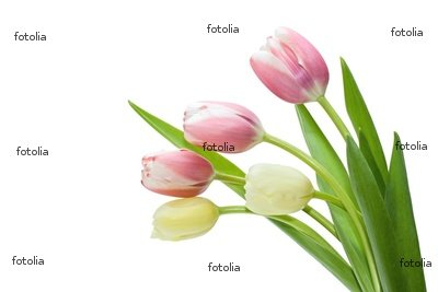 "Wallmonkeys Peel and Stick Wall Decals - Bouquet Tulip - 48""W x 32""H Removable Graphic"