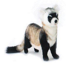 Black Footed Ferret <br>15.75 Inches