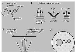 GOWE binocular stereo biology best study microscope binocular viewing microscope body
