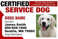 Service Dog ID Tag and Badge combo custom photo id for pet purple