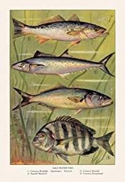 30 x 20 Stretched Canvas Poster Saltwater Fish #4