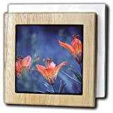 Alberta, Jasper National Park. Wood lily flowers-CN01 BJA0004 - Janyes Gallery - 6 Inch Tile Napkin Holder