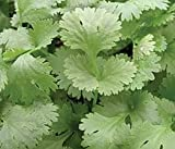 Just Seed Herb - Coriander Leisure - Coriandrum sativum Leisure' - 1000 seeds