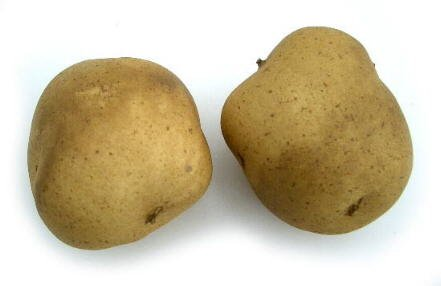 small-brown-potato-artificial-vegetable-fake-food-bag-of-24