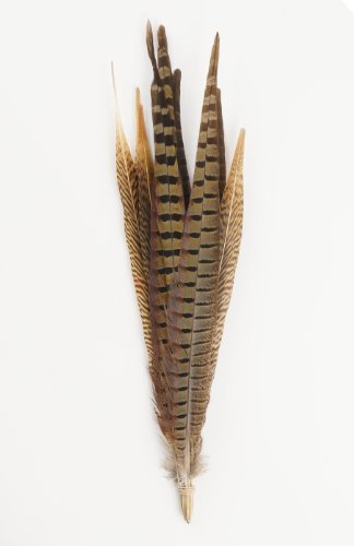 Zucker Feather Products Assorted Natural Pheasant Tails Feathers, 14 to18-Inch