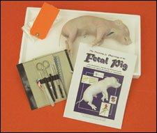 EW FETAL PIG