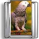 Brown Parakeet Italian charm