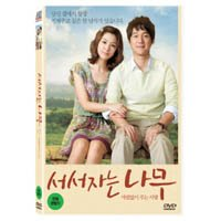韓国映画 ソ・ジヘ、ソン・チャンイ主演「立って寝る木」DVD(+英語字幕)