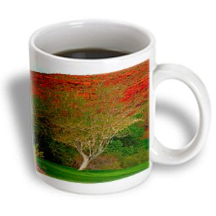 Jos Fauxtographee Trees - A Tree That Stands Out From All The Rest In Green Grass - 11Oz Mug (Mug_79709_1)