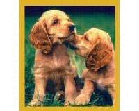 Cocker Spaniel Puppies Fridge Magnet