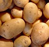 Autumn Planting Seed Potatoes - Charlotte (9 Tubers in Pack)