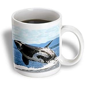3dRose Killer Whale Airbourne Ceramic Mug, 11-Ounce