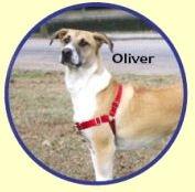 PREMIER Easy Walk Dog Harness Size:Med/Large Color:Purple