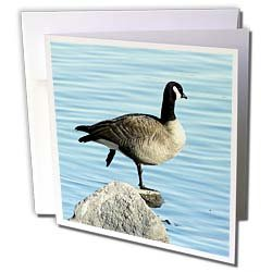 Cassie Peters Photography - Canada Goose Photographed by Angelandspot - Greeting Cards-6 Greeting Cards with envelopes