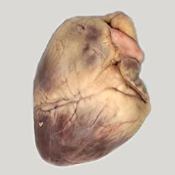 Perfect Solution Preserved Sheep Heart, Plain, Pail
