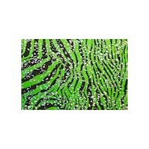 Zebra Bling Throw Pillow Cover....Lime/Black/Silver 20 x 20