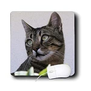 Taiche - Photography - Tabby Cats - Cat Portrait - animal, moggie, tabbies, tabby cat, cat, cats, cute - Mouse Pads