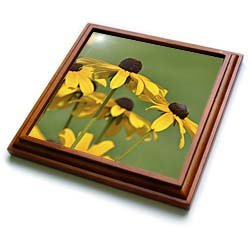 PS Flowers - Yellow Black Eyed Susan Flowers - Floral Print - Trivets