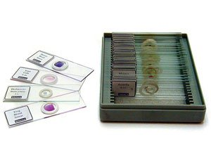 Glass Microscopes Slides (72/pkg)