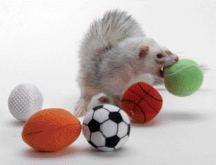 Marshall Pet Products Ferret Sports Balls X Small – FT-289