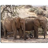 desierto-de-luxlady-gaming-mousepad-una-familia-de-elefantes-relaja-en-la-sombra-de-un-arbol-de-acac