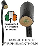 "Royal Canes - Authentic Irish Blackthorn Shillelagh Stick 16""-18"""