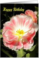 Happy Birthday-Beautiful Coral Peach Flower Image Greeting Card Card