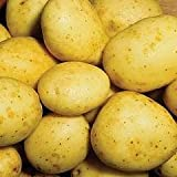 Maris Piper Seed Potatoes - 2.5kg Pack - Maincrop - Potato