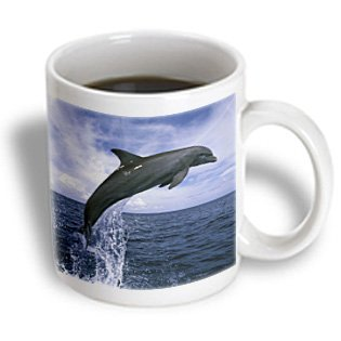 3Drose Honduras Bottlenose Dolphin Sa12 Swe0053 Stuart Westmorland Ceramic Mug, 15-Ounce