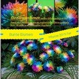 25x Bunte Blumen Samen Regenbogen Hingucker Pflanze Blum Rarität neu 2016 #94