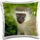 David Wall - Primates - Vervet Monkey, Chlorocebus pygerythrus, Kruger NP, South Africa - 16x16 inch Pillow Case