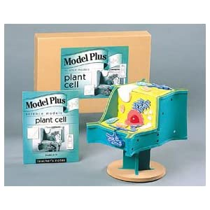 Plant Cell Styrofoam Model http://www.amazon.com/Plant-Model-Durable-Non-Toxic-11-5L/dp/B003LLOT1Q