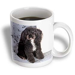 Black and white Toy Poodle - 11oz Mug