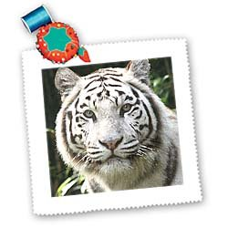3dRose LLC qs_4845_1 White Tiger 10 by 10-Inch Quilt, Square