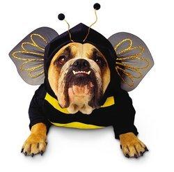 Zelda Bumblebee Dog Costume by Disguise