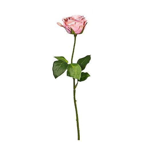 Rose Wasserstiel 47,5cm d-rosa