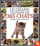 Calendars and Postcards: Grand Calendrier DES Chats 2012/Calendrier Mensuel, 1 Photo Par Jour