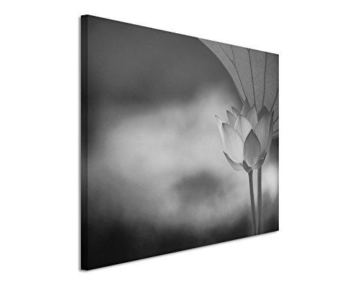 50x70cm Leinwandbild schwarz weiß in Topqualität Nahaufnahme Lotusblüte